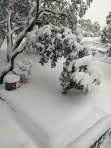 Rotura de árbol por nieve